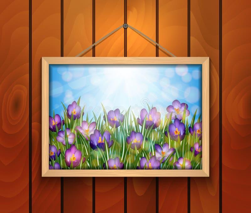 Le crocus fleurit dans le cadre de tableau sur le mur en bois illustration libre de droits