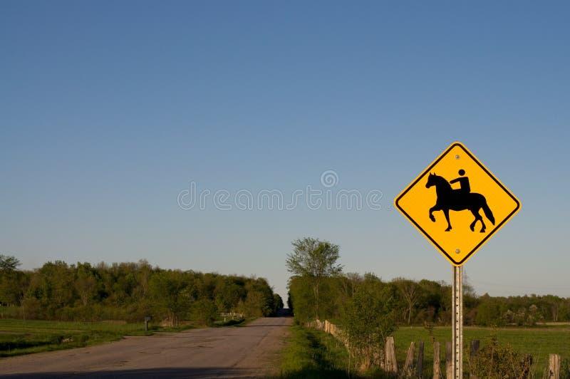 Le croisement de cheval se connectent une route rurale photo stock