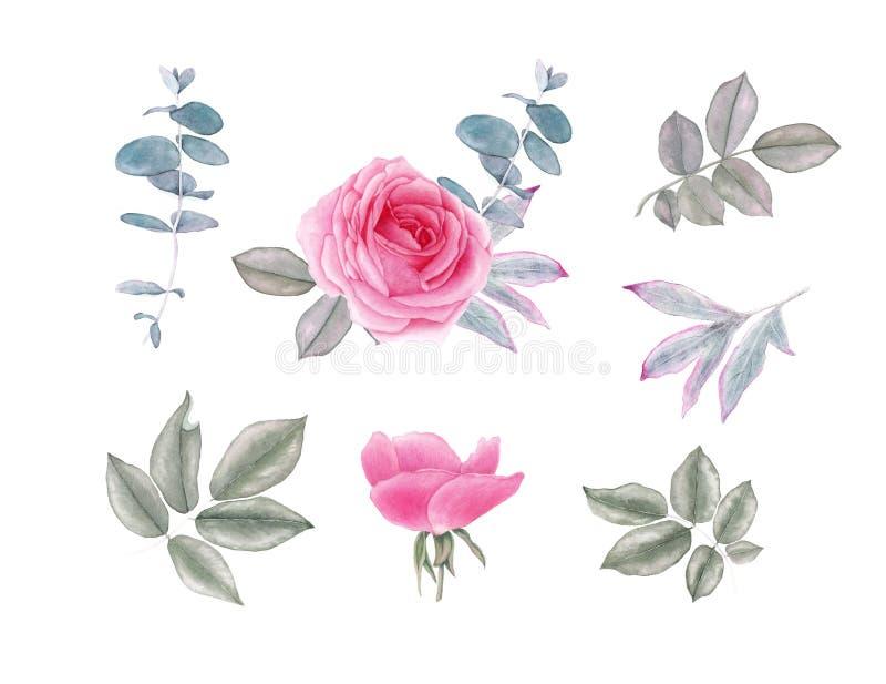Le cru d'aquarelle s'est levé des fleurs et des feuilles illustration libre de droits