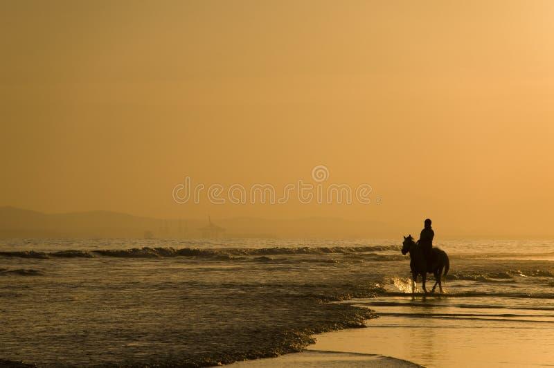 Le curseur de cheval sur la plage image libre de droits