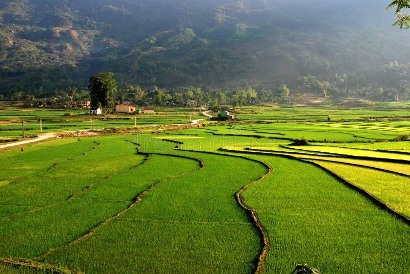 Le curve del riso del terrazzo sistemano nella montagna immagini stock