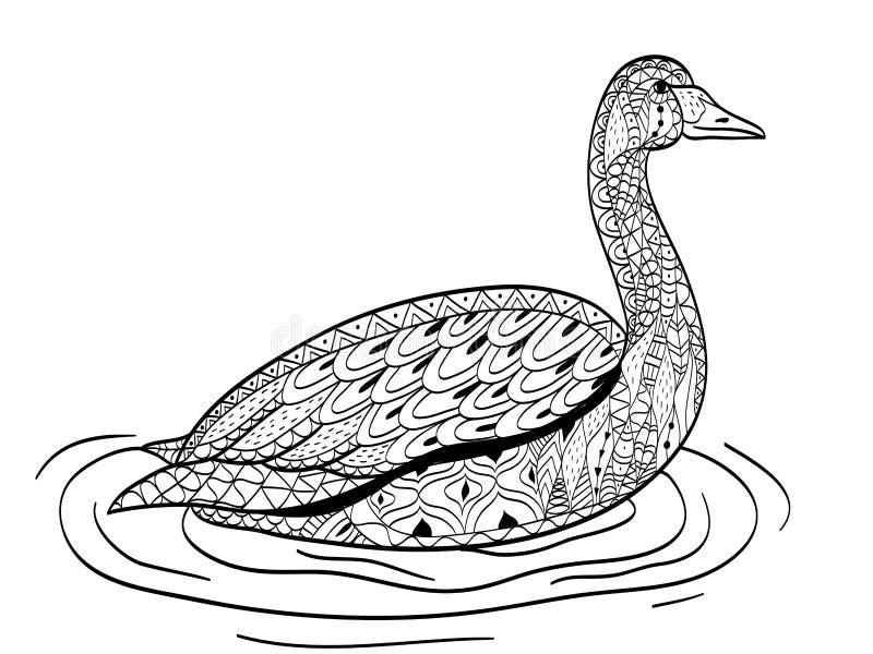 Le cygne nage sur le vecteur de coloration de l'eau pour des adultes illustration libre de droits