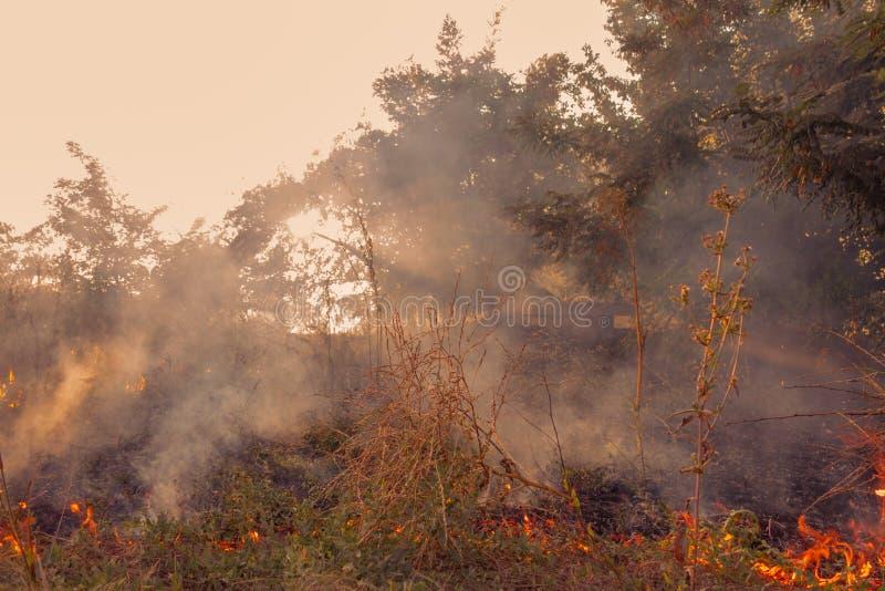 Le début d'un incendie de forêt L'herbe sèche brûle photographie stock