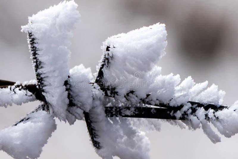 Le dégel argenté image stock