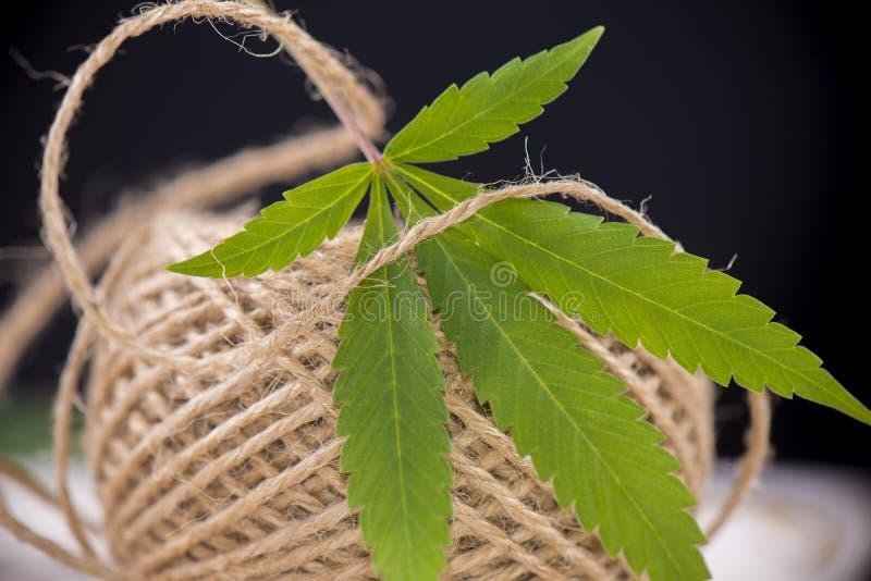 Le détail de la ficelle de fibre de chanvre et les cannabis poussent des feuilles photographie stock