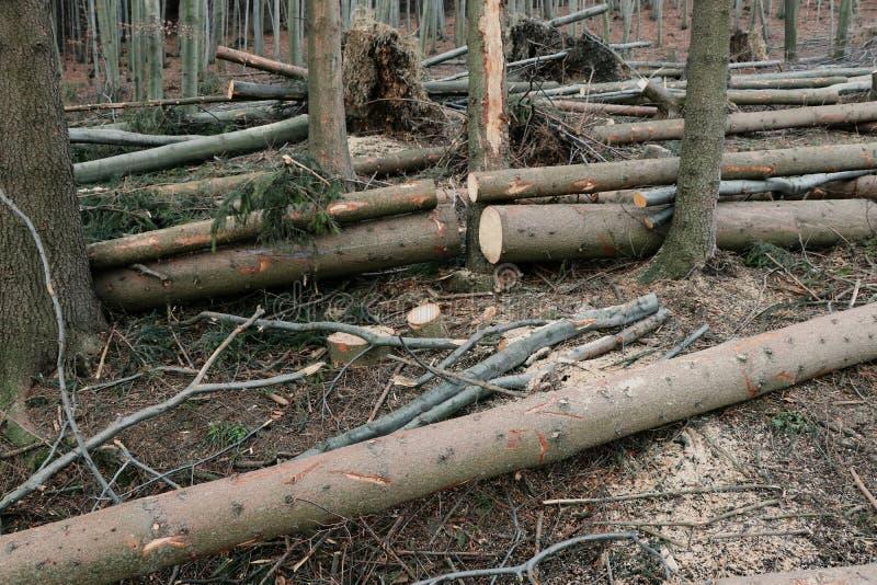 Le détail sur beaucoup d'arbres endommagés après des ventis photographie stock libre de droits