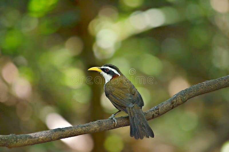 Le danger de surveillance d'oiseau dans sauvage images libres de droits