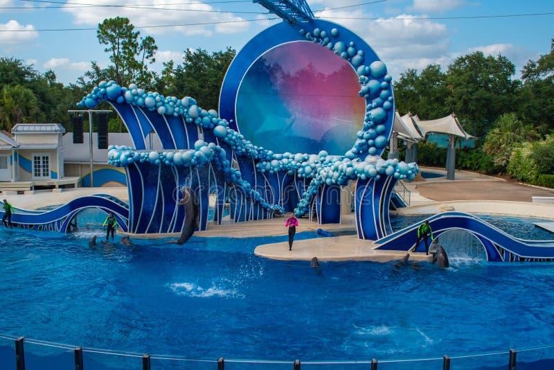Le dauphin sautant dans le contact l'exposition de ciel par l'océan électrique chez Seaworld 5 images stock