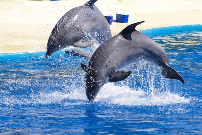 Le dauphin sautent images libres de droits