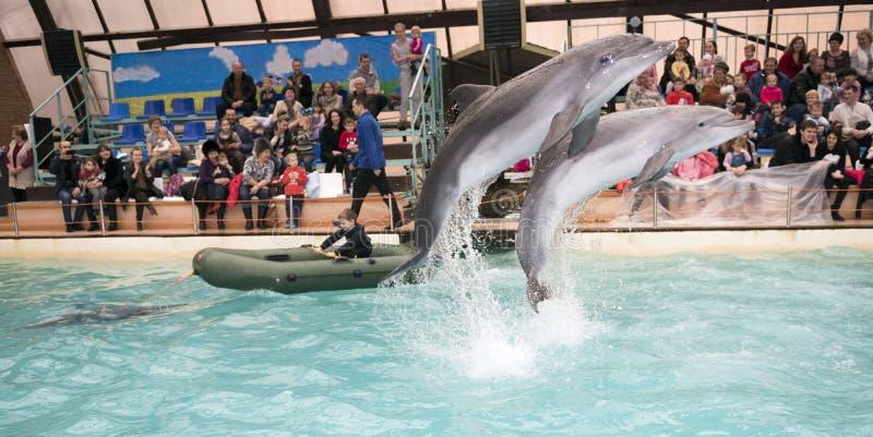 Le dauphin traîne le garçon dans le bateau photographie stock