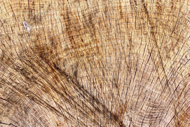 Le ¡ de Ð perdent- de la désagrégation du vieux tronçon de bois de flottage, une coupe d'un arbre photographie stock libre de droits