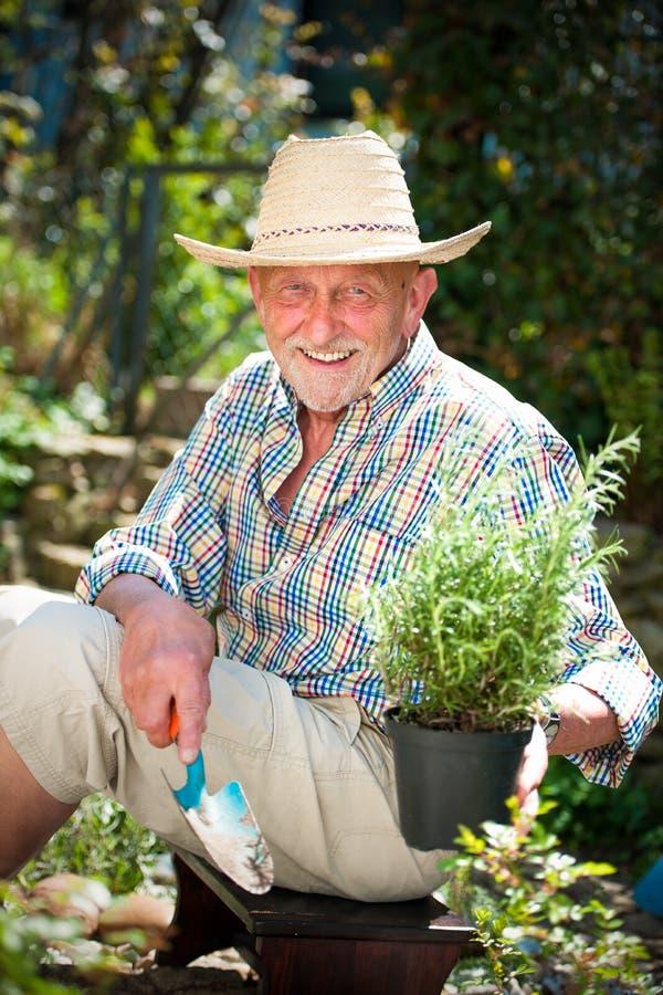 Le den höga mannen i trädgården arkivbilder