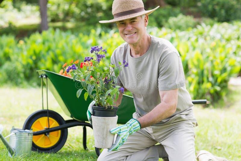 Le den mogna mannen som är förlovad, i att arbeta i trädgården royaltyfri foto