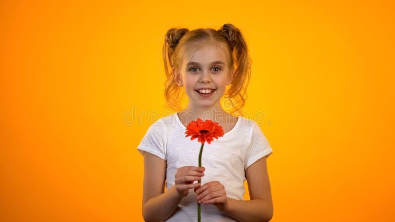 Le den preteen flickan som ser till kameran och att rymma gerberablomman, födelsedaggåva royaltyfri bild