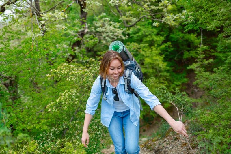 Le den unga kvinnan som kopplas in, i trekking i bergskogen arkivfoton