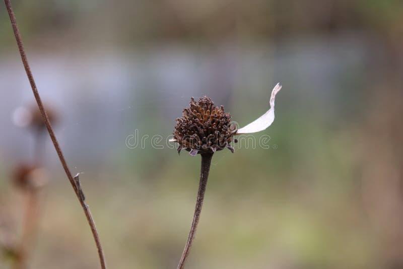 Le dernier pétale sur une fleur images stock