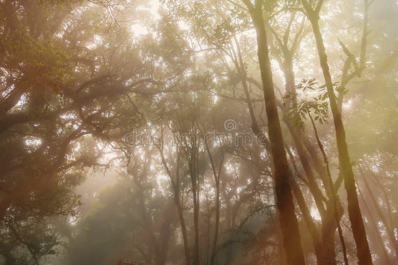 Le dessus d'arbre un matin brumeux ForestThailand brumeux magique photo stock
