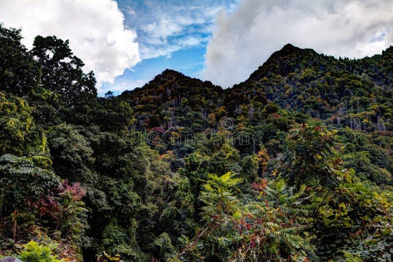 Le dessus de cheminée de parc national de Great Smoky Mountains photos stock