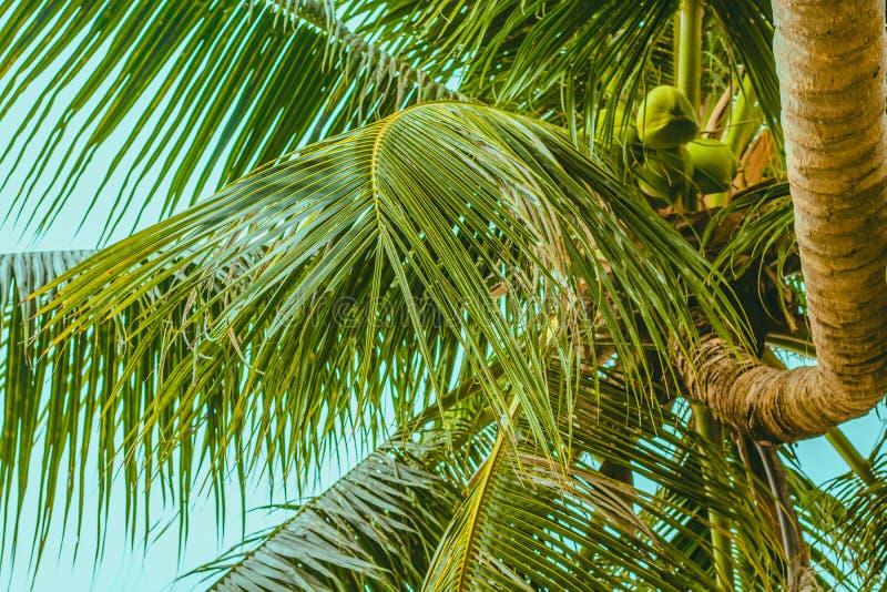 Le dessus du palmier et du tronc tordu photographie stock libre de droits