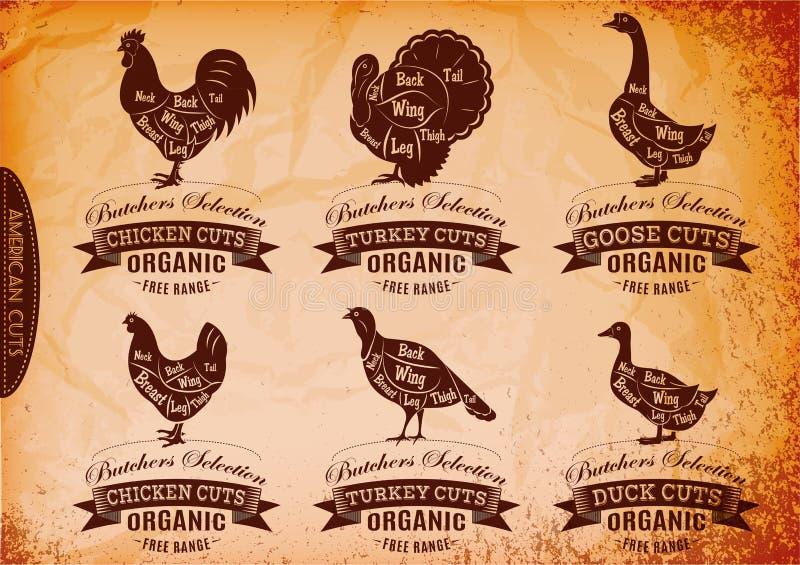 Le diagramme a coupé des carcasses poulet, dinde, oie, canard illustration libre de droits