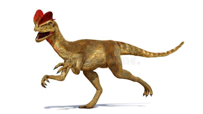 Le Dilophosaurus, dinosaure de theropod de la période jurassique tôt 3d rendent d'isolement avec l'ombre sur le fond blanc illustration libre de droits