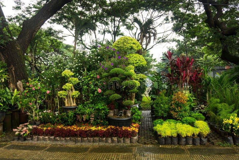 Plantes jakarta for Ventes de plantes par internet