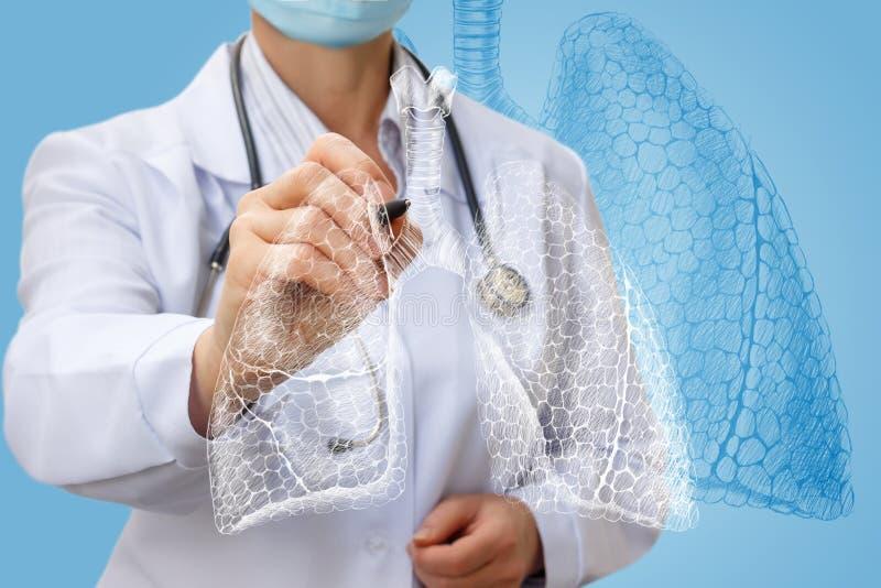 Le docteur dessine les poumons sur l'écran photos stock