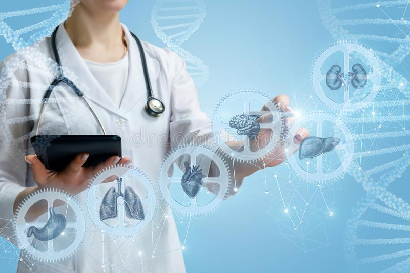 Le docteur travaille avec un mécanisme compliqué de santé des personnes image libre de droits