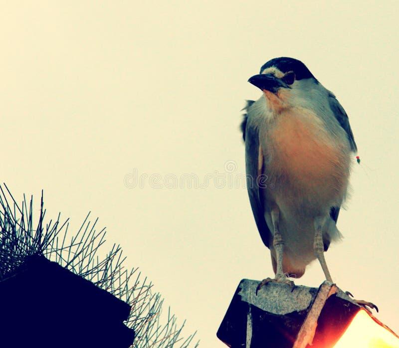 Le don't veuillez s'occuper de moi, dit l'oiseau image libre de droits