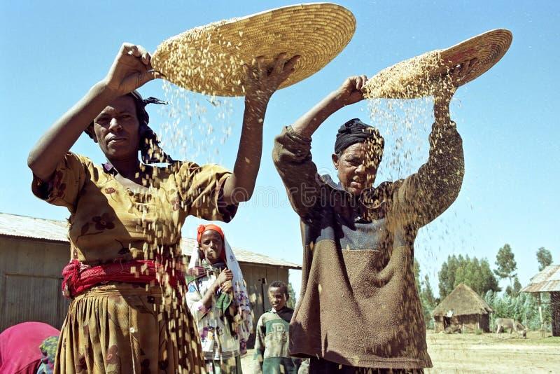 Le donne etiopiche separano la pula dal grano fotografie stock