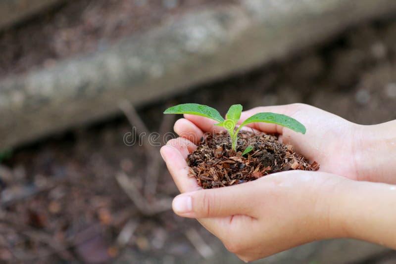 Le donne stanno piantando gli alberi fotografie stock libere da diritti
