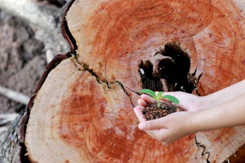 Le donne stanno piantando gli alberi immagine stock libera da diritti