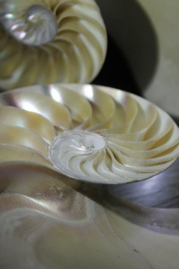 Le dos d'or en spirale à moitié en coupe de fin de croissance de structure de rapport de Fibonacci de symétrie de coquille de Nau photographie stock