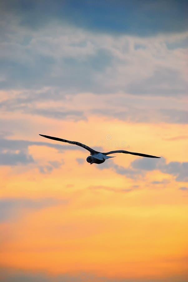 Le dos du vol de mouette chez Bangpoo Samut Prakan photos libres de droits