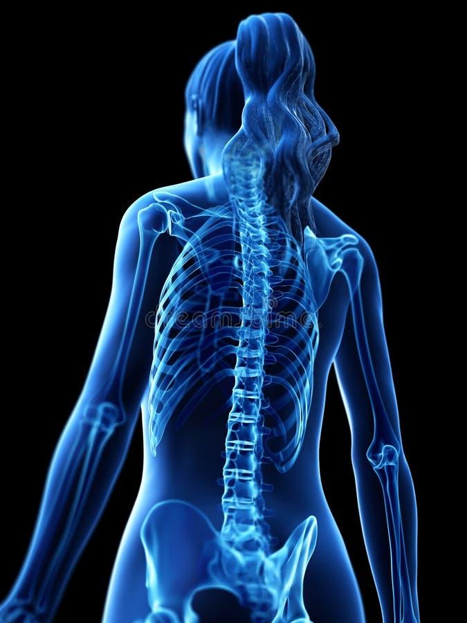 Le dos squelettique d'une femme illustration stock