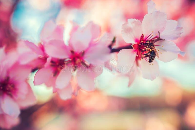 Le doux a focalisé la fleur de floraison rose Macro tir de prochain ressort photos libres de droits