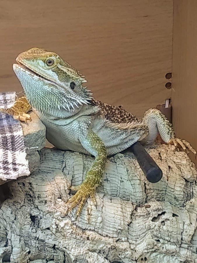Le dragon photos stock