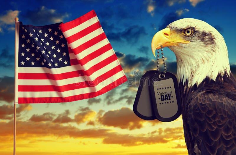 Le drapeau américain et l'Eagle chauve tient des étiquettes de chien dans son bec au coucher du soleil photos libres de droits