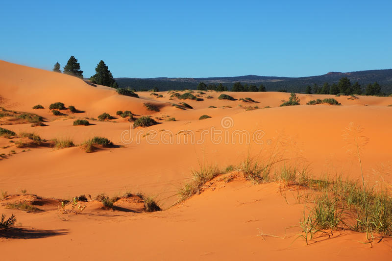 Le dune di sabbia arancioni, gialle e dentellare fotografia stock libera da diritti