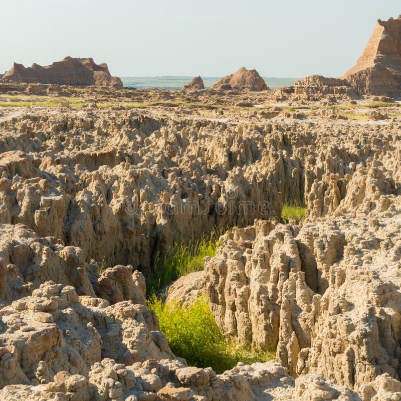 Le erbe si sviluppano in canyon del menagramo immagini stock
