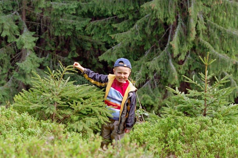 le för pojkeskogreserv royaltyfri bild