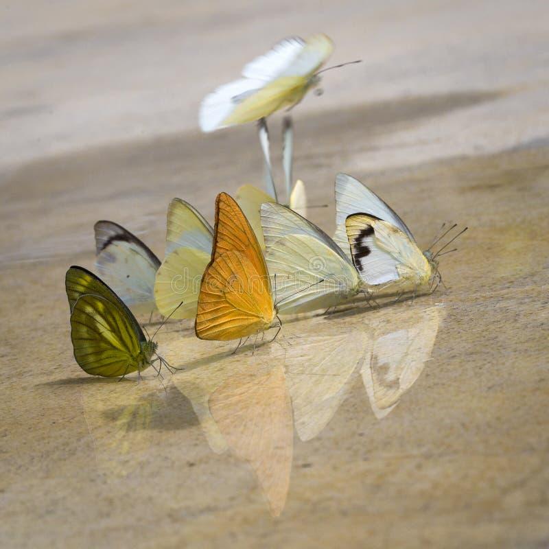 Le farfalle compaiono presto di estate fotografia stock