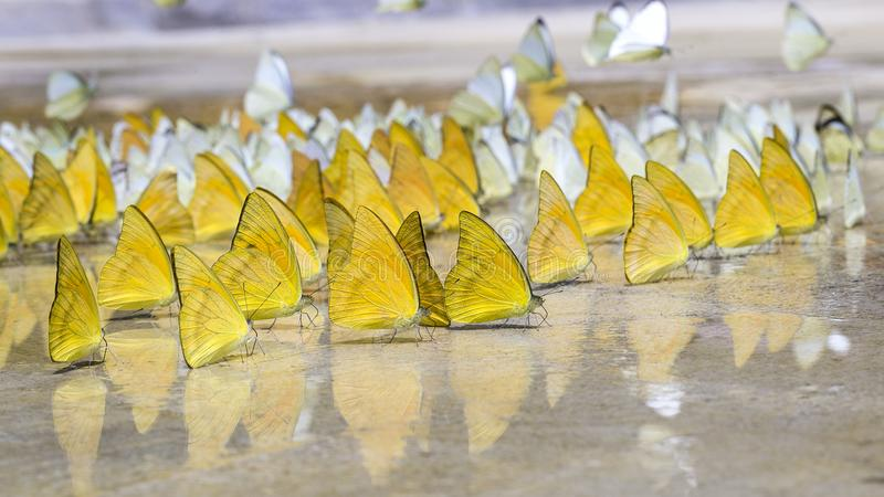 Le farfalle compaiono presto di estate fotografie stock