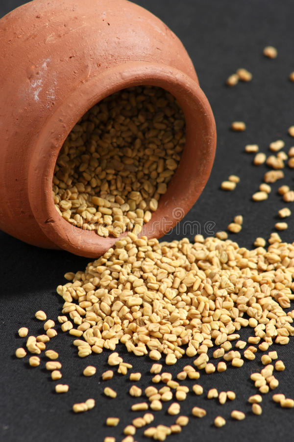 Le fenugrec est employé comme herbe et comme épice photographie stock libre de droits