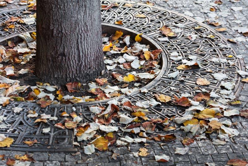 le fer râpe pour la protection des racines d'arbre dans la ville photo stock