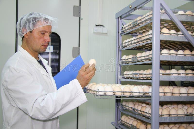 Le fermier contrôle des oeufs de poulet image libre de droits