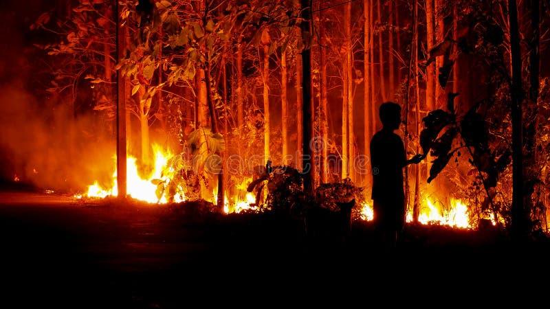 Le feu brûle la forêt la nuit images libres de droits