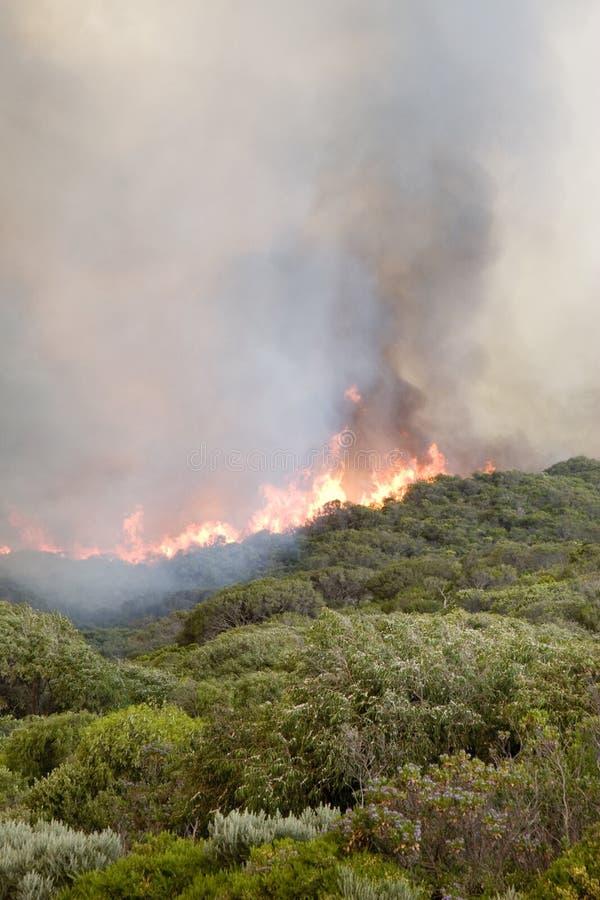 Le feu de brousse de plage de Prevelly photo libre de droits