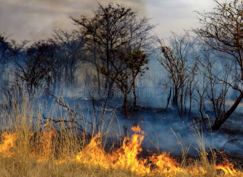 Le feu de Bush photos stock