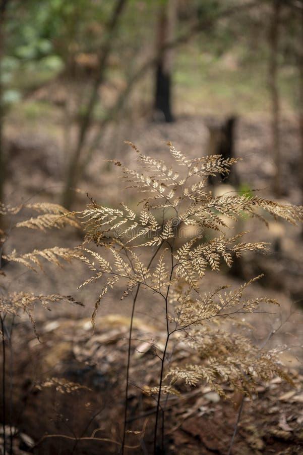 Le feu de Bush dans l'Australie de NSW photographie stock